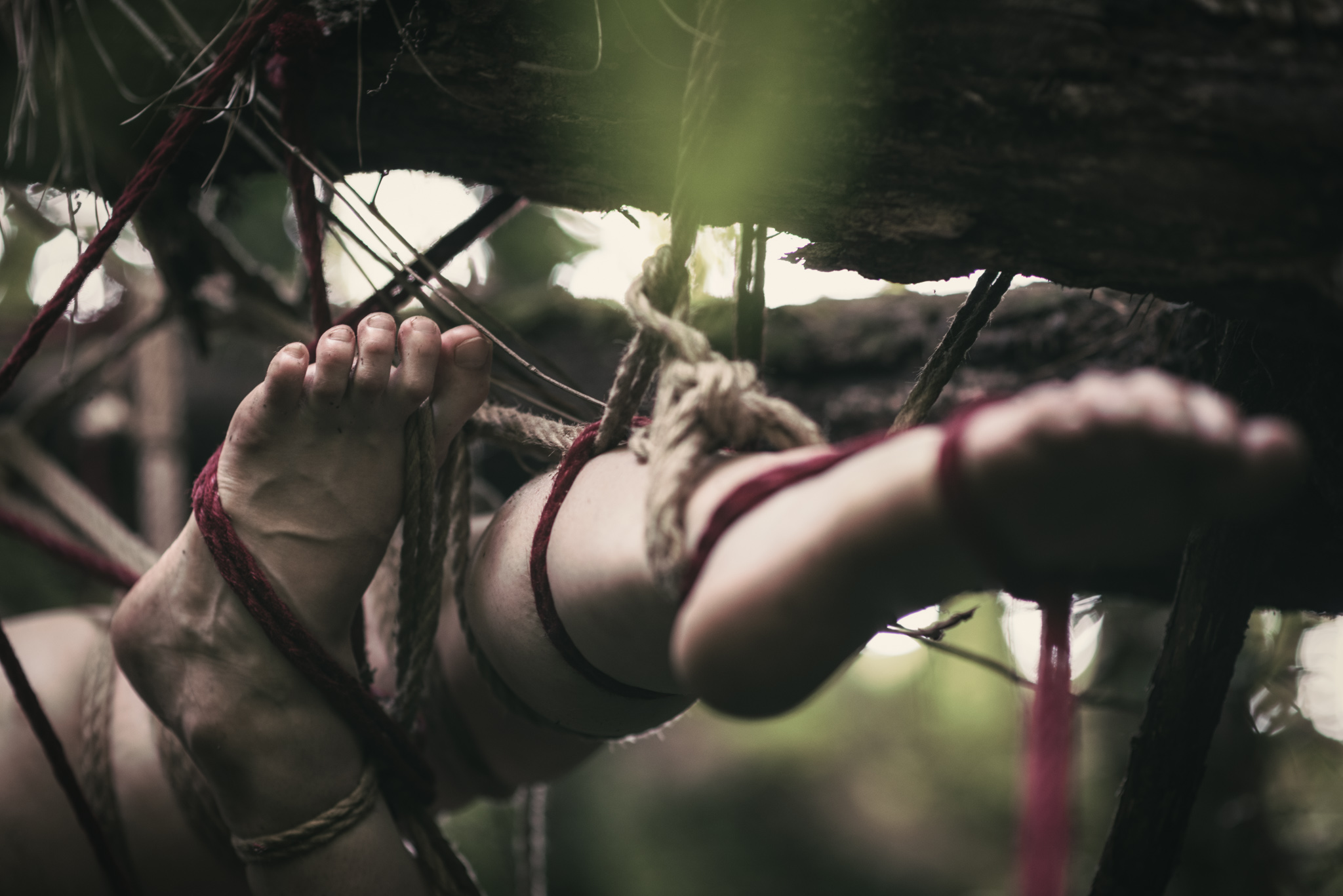 Tangled Limbs (Preview)